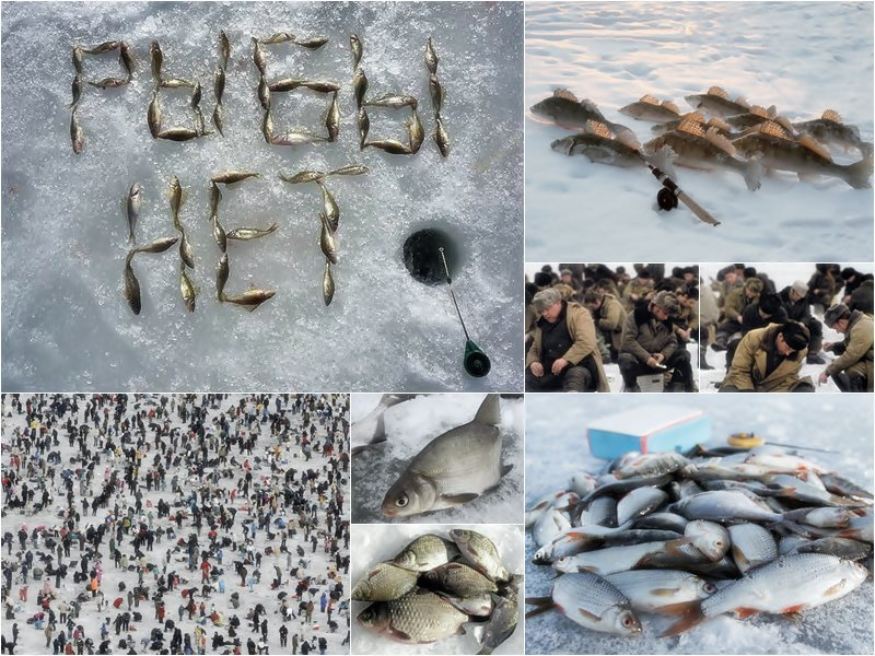 рыба не клюет это нас не