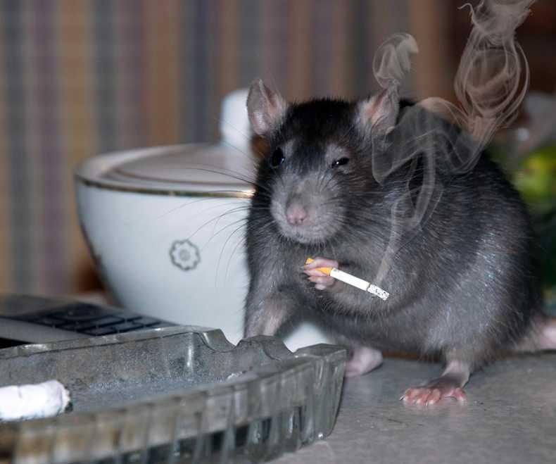 Моя большая, картинки с мышами прикольные с надписями