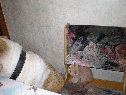 Коты ссут под дверью что делать