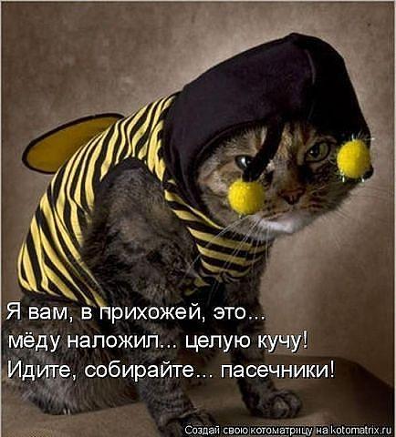 http://msk.forum.motolodka.ru/att/club/432512_44076.jpg