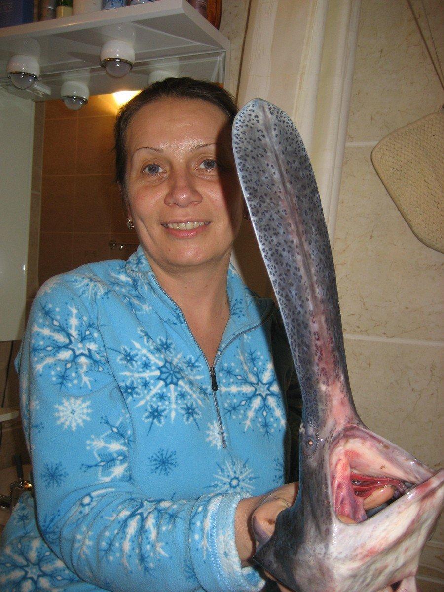 толстолобик что за рыба польза и вред