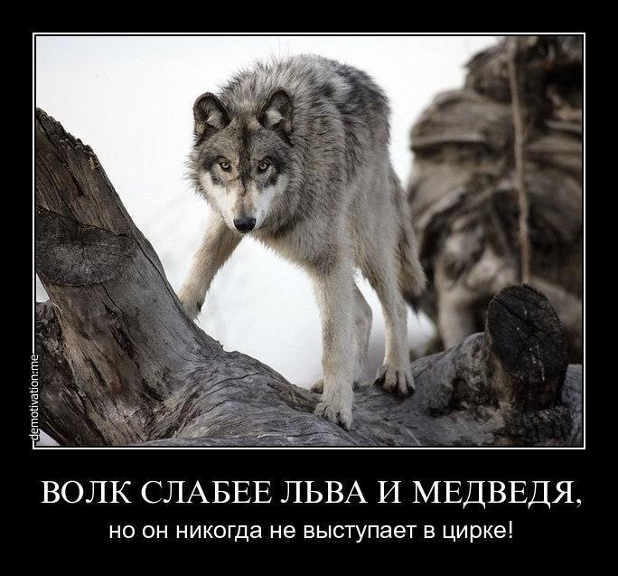 начнем демотиваторы не будь овцой так и волк не съест мыло ручной