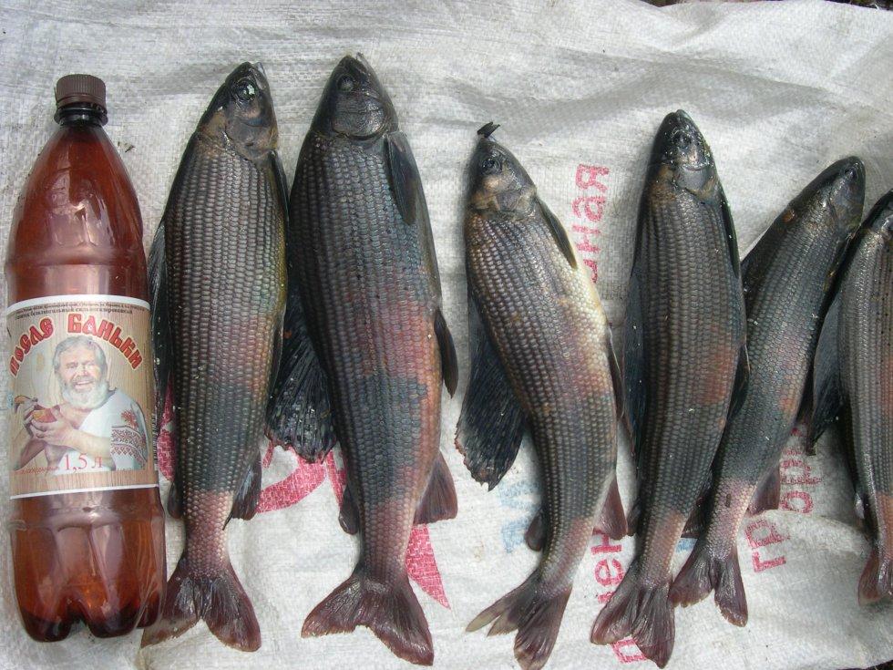 рыбалка на хариуса север